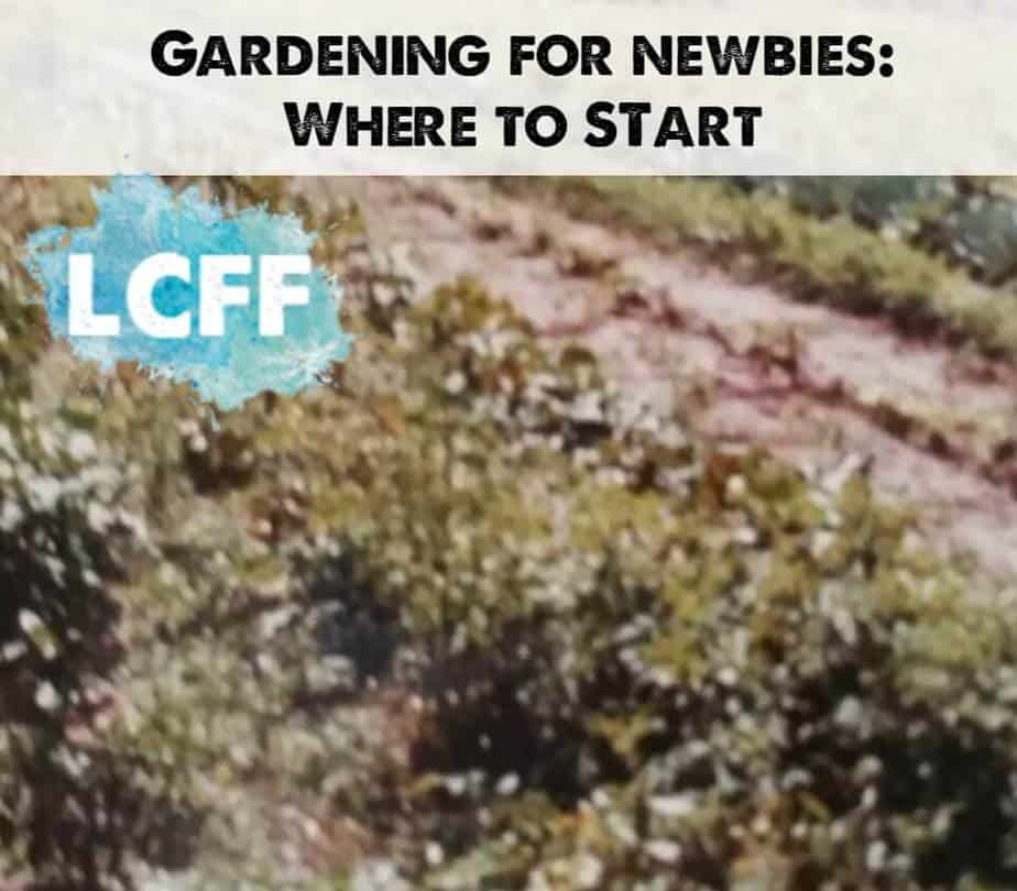 Gardening for Newbies - Martha Lake Country Family Fun Gardening with kids learning outside