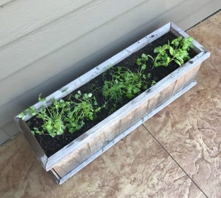 My Raised Bed Garden Project What's Growing Lake Country Family Fun Martha
